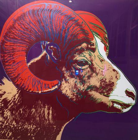 Serigrafia Warhol - Bighorn Ram Tp (Fs Ii.302)