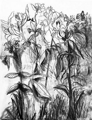 Incisione Dine - Black & White Flowers Iv
