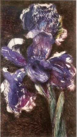 Litografia Kentridge - Dutch Iris II
