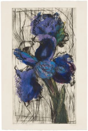 Acquaforte E Acquatinta Kentridge - Dutch Iris (Trial Proof B)