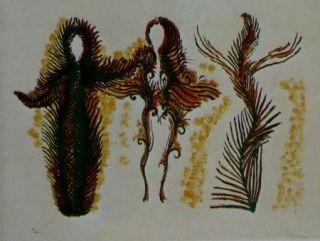 Litografia Fenosa - Femmes lianes