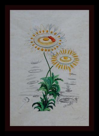 Incisione Dali - Flora Dalinae Chrysanthemum