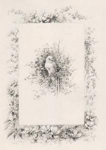 Libro Illustrato Giacomelli - Histoire d'un merle blanc. Compositions de Hector Giacomelli gravées à l'eau-forte par L. Buisson.