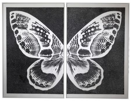 Serigrafia Robierb - Hybrid Silver Butterfy II on Black