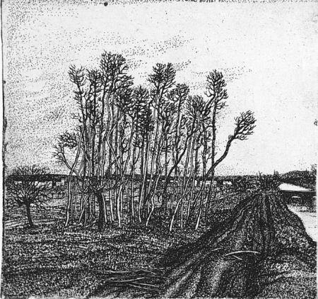 Acquaforte Bozzetti - Il boschetto lungo l'argine (II versione)