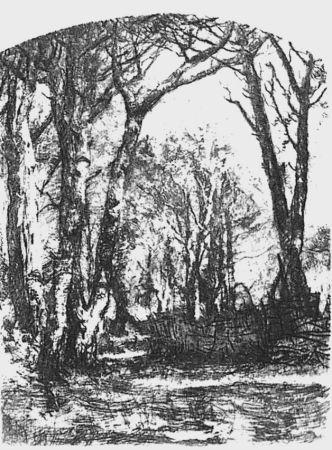 Acquaforte Bianchi - Il bosco