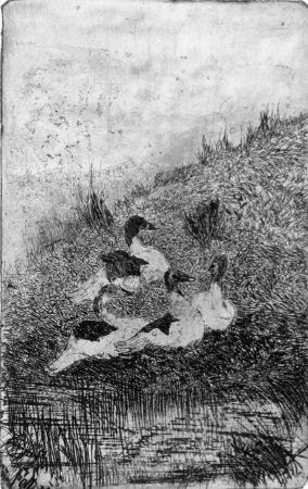 Acquaforte Fattori - Le anatre