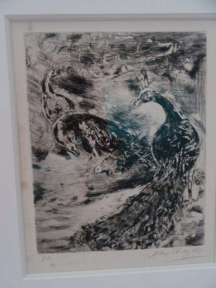 Acquaforte Chagall - Le Geai pare des plumes  du Paon