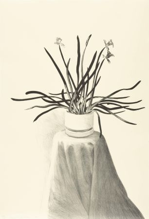 Litografia Hockney - Potted Daffodils