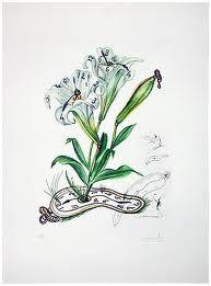 Punta Secca Dali - Surrealistic Flowers, 540, Lilium longiflorum vel tempus