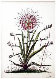 Punta Secca Dali - Surrealistic Flowers, 543, Allium chrisophi pilique pubescentes