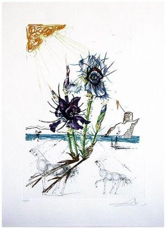 Punta Secca Dali - Surrealistic Flowers, 544, Iris germanica cum ocellis italicis