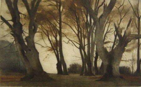 Maniera Nera Ilsted - Trees in Elmelunden