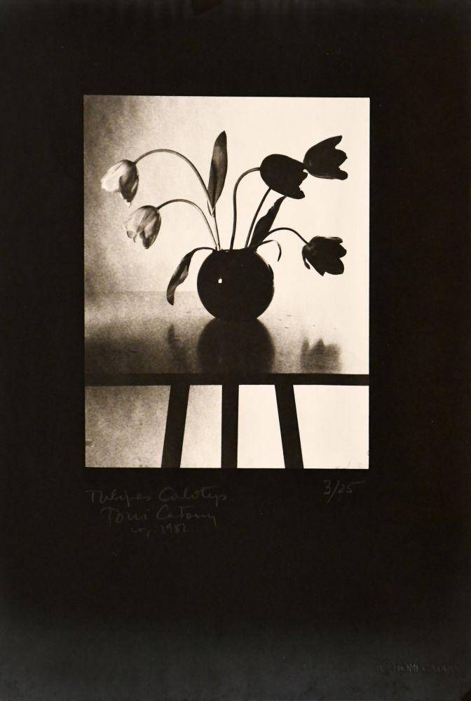 Fotografie Catany - Tulipes