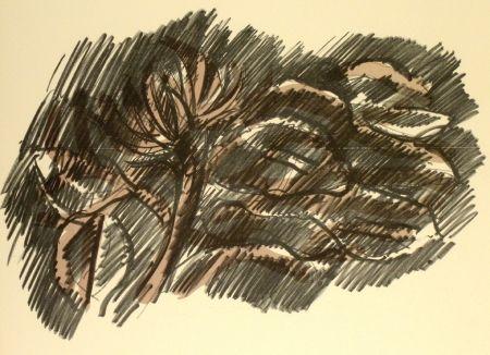 Litografia Morlotti - Vegetali