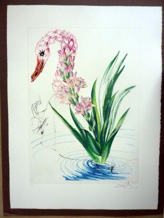 Incisione Dali - Water Hibiscus Plus Swan (Florals)